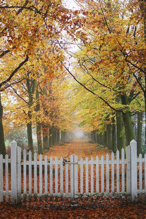 Autumn Rain Wallpapers High Quality   Download Free