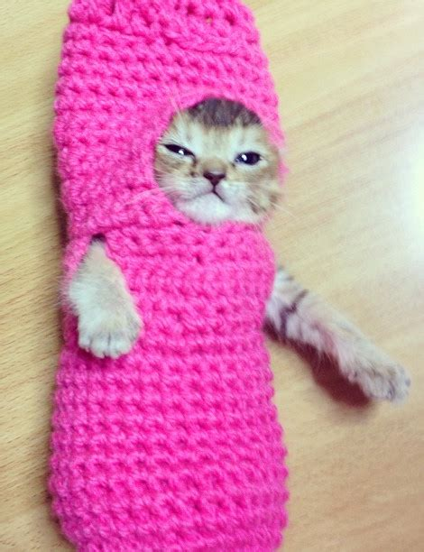 "Everything Wrong With My Life — A ""purrito"" is a cat or"