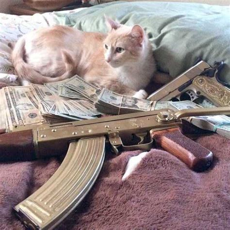 Hilarious Rich Cats That Have More Money Than You | BoredBug