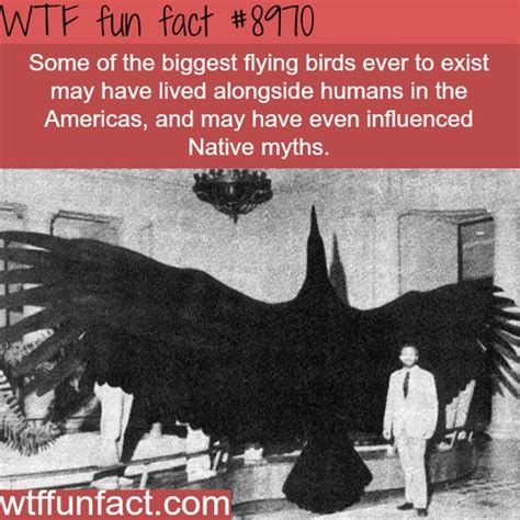 WTF Fun Facts Collection - Barnorama