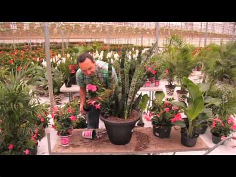 DIY Rio Tropical Planter with Frankie Flowers - YouTube