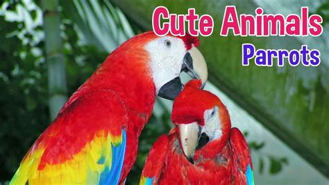 PARROTS - Animals For Kids - Parrot photos with classical